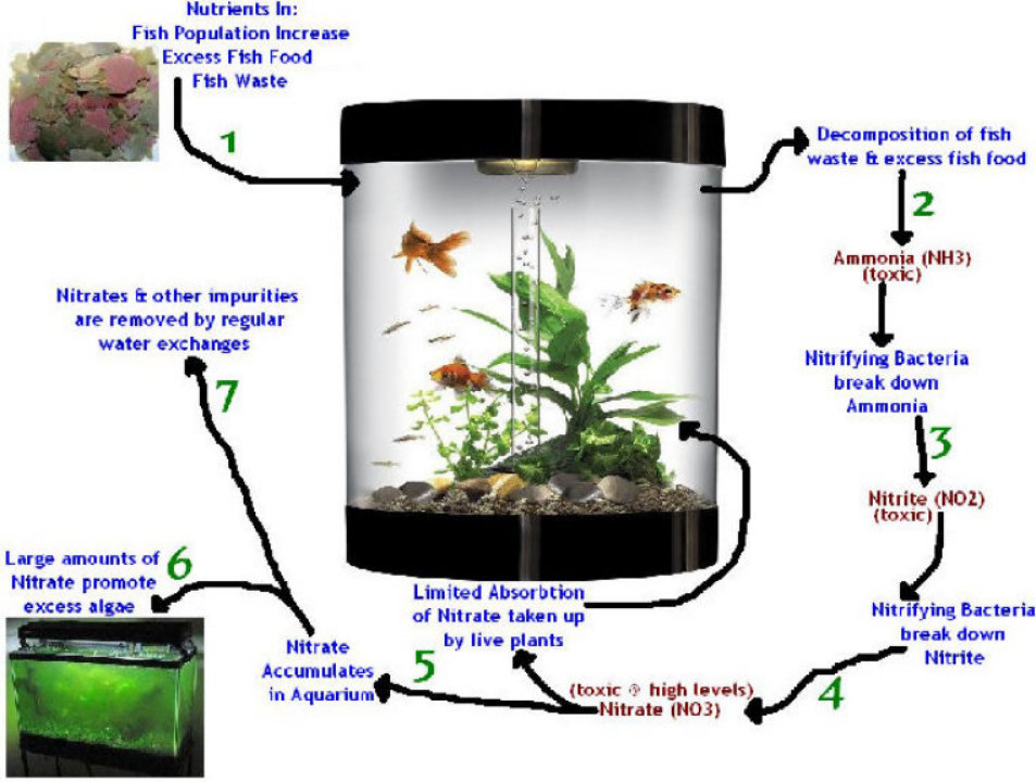 1 Nutrients Entering Your Aquatic Setup Are The Beginning Of Nitrogen Cycle Nutrient Contributing Factors Fish Potion Feeding Dead And Dying